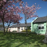 Cherry Blossoms - Green and Pink Bungalows