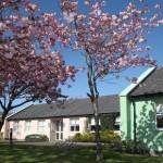 Corrib Village Cherry Blossom 2 680x310